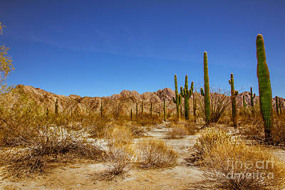 Photograph - The Sonoran Desert by Robert Bales