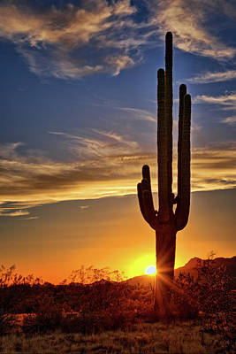 Photograph - The Sonoran Evening Glow  by Saija Lehtonen