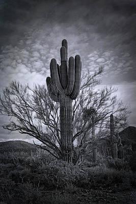 Photograph - The Sonoran Sentinel  by Saija Lehtonen
