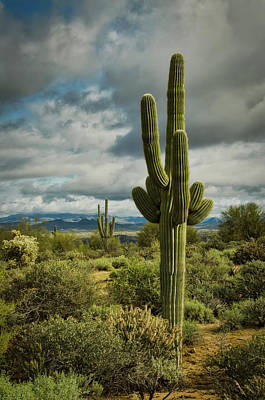 Photograph - The Sonoran Sentinels  by Saija Lehtonen