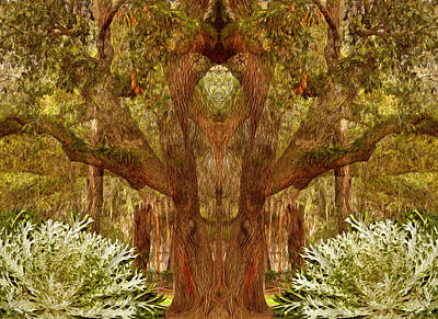 Photograph - The Sorcerers Tree by Lynda Lehmann