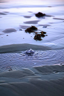 Drip Photograph - The Sound Of Bubbles by Betsy Knapp