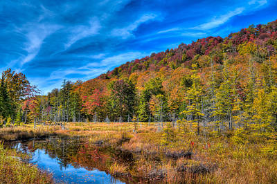 Photograph - The South End Of The Pond by David Patterson
