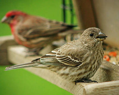 Photograph - Two Finch's by Susan  McMenamin