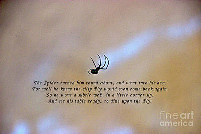Photograph - The Spider And The Fly by Al Bourassa