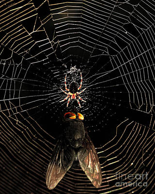 The Spider  And The Fly Print by Wingsdomain Art and Photography