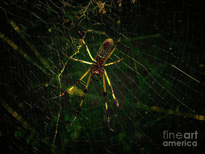 Photograph - The Spider by Camille Pascoe