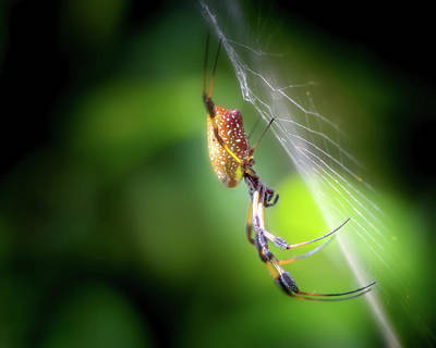 Beauty Mark Photograph - The Spider In The Forest by Mark Andrew Thomas
