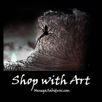 Photograph - The Spider On The Candle - Shop With Art by Menega Sabidussi
