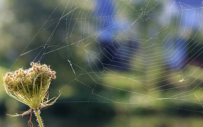 Photograph - The Spider Web by Joni Eskridge