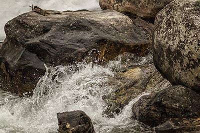 Photograph - The Splash Of A Stream by Belinda Greb