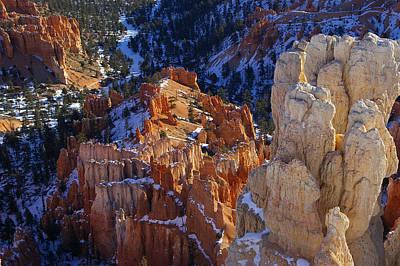 Photograph - The Splendor Of Bryce by David Andersen
