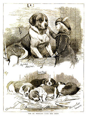 Pups Drawing - The St Bernard Club Dog Show by Charles Burton Barber