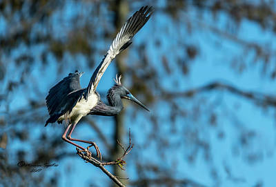 Heron Photograph - The Stage Entry by Marvin Spates