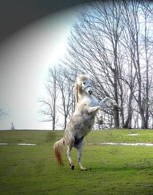 The Stallion Dancer Original by Patricia Keller