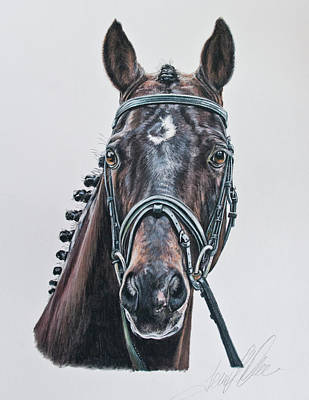 Hanoverian Pastel - The Stallion Don Principe  by Terry Kirkland Cook