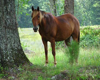 Digital Art - The Stallion  by Donna Brown