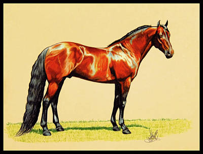 Drawing - The Standardbred by Cheryl Poland