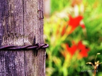 Photograph - The Staple by J L Zarek