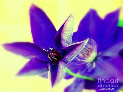 Photograph - The Star by Elfriede Fulda