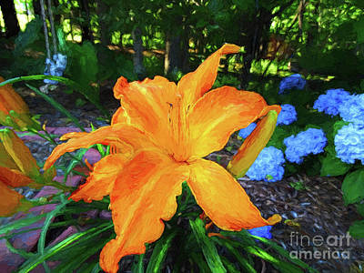 Photograph - The Star Of The Garden by Sue Melvin