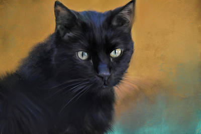 Painting - The Stare Down by Jai Johnson
