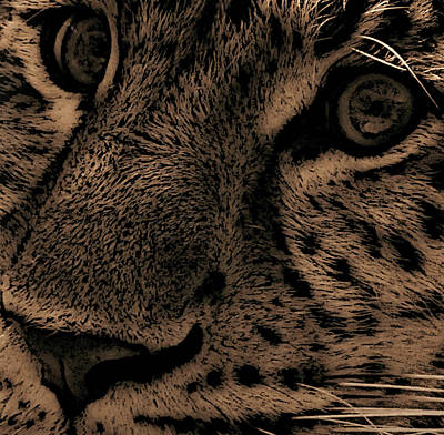 Leopard Portrait Photograph - The Stare by Martin Newman