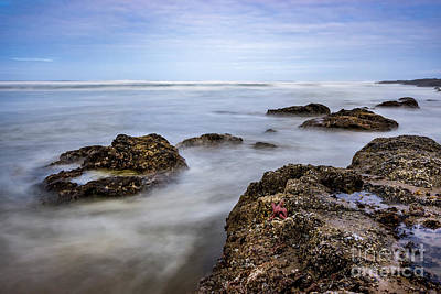 Photograph - The Starfish by Ronda Kimbrow