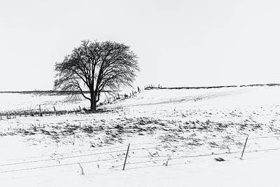 Photograph - The Starkness Of Winter by Penny Meyers