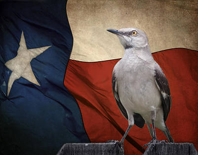 Photograph - The State Bird Of Texas by David and Carol Kelly