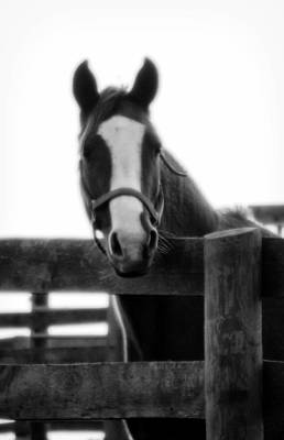 Keeneland Photograph - The Steed by Wayne Stacy