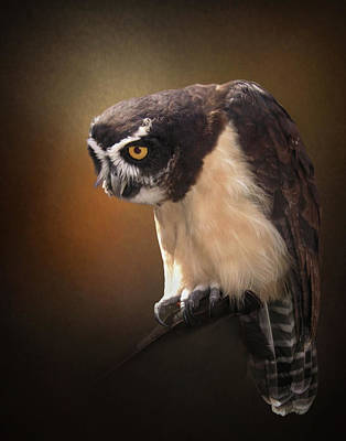 Photograph - The Stern Look Of The Spectacled Owl by David and Carol Kelly