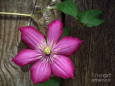 The Still Life Of A Flower 2 Art Print