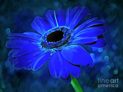 Blue Flowers Photograph - The Still Of The Night by Krissy Katsimbras