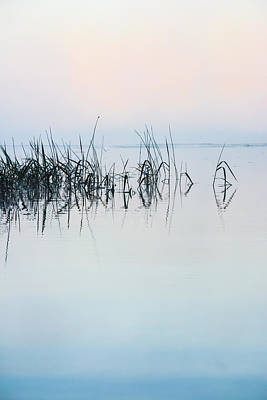 Photograph - The Stillness Of Life by Shelby  Young