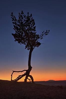 Photograph - The Stilt Tree 2017 by Ralph Nordstrom