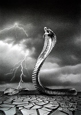 Cobra Drawing - The Storm Is Coming... by Miro Gradinscak