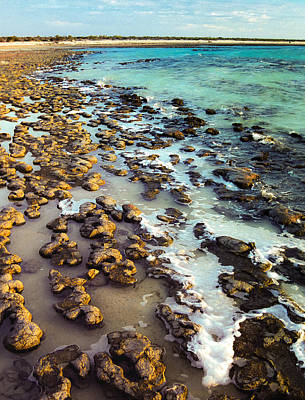 Photograph - The Stromatolite Family Enjoying Its 1277500000000th Sunset by T Brian Jones