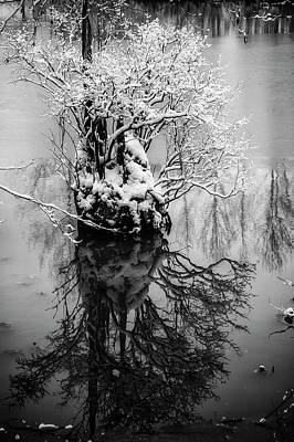 Photograph - The Stump by Monte Arnold