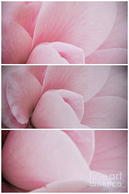 Pink Camellia Photograph - The Sum Of The Parts by Linda Lees