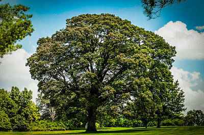 Photograph - The Summer Tree by Kristy Creighton