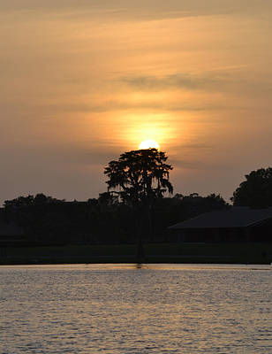 Photograph - The Sun And The Bald Cypress by rd Erickson