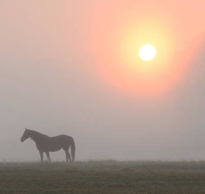 The Sun Burning Through The Fog In Whitemarsh Art Print by Bill Cannon
