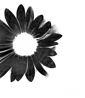 Photograph - The Sun In The Flower Bw by Tim Richards