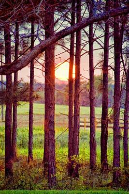 Art Print featuring the photograph The Sun Pines Away by Jan Amiss Photography