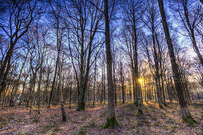 Photograph - The Sun Ray Forest by David Pyatt