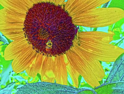 Photograph - The Sunflower And The Bee by Amanda Smith