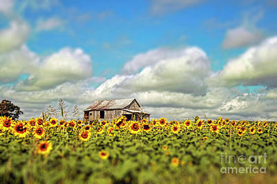 Field Of Crops Photograph - The Sunflower Farm by Darren Fisher
