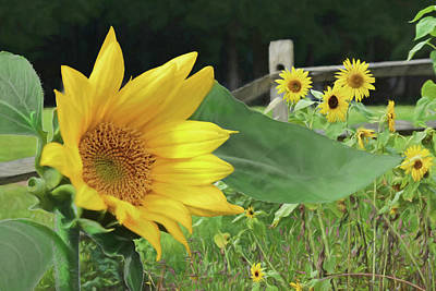 Photograph - The Sunflower Patch by Lori Deiter