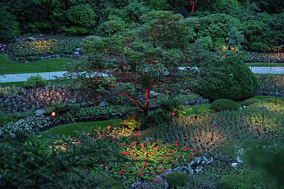 Photograph - The Sunken Garden Tree At Dusk by Michael Bessler